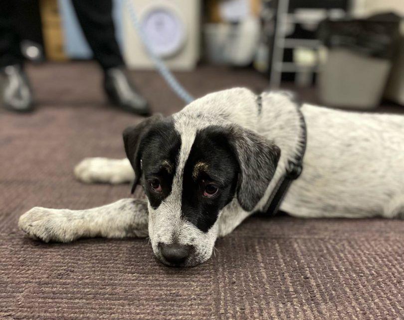 Speck the dog on police station floor in Sydney.