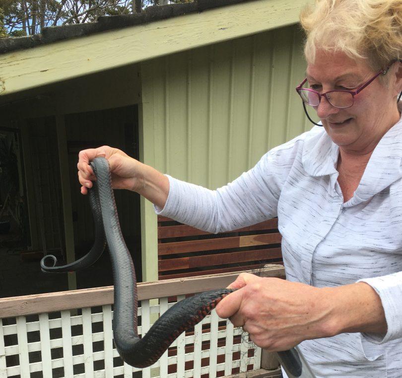 WIRES snake handler Kay Mallitt with red-bellied black snake.