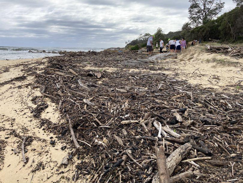 Piles of burnt driftwood on Shelly Beach.