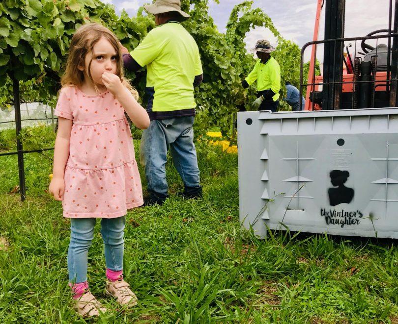 Young girl tasting grapes at Vintner's Daughter.