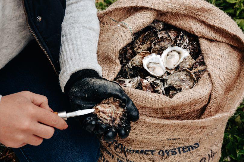 Merimbula Sydney Rock oysters