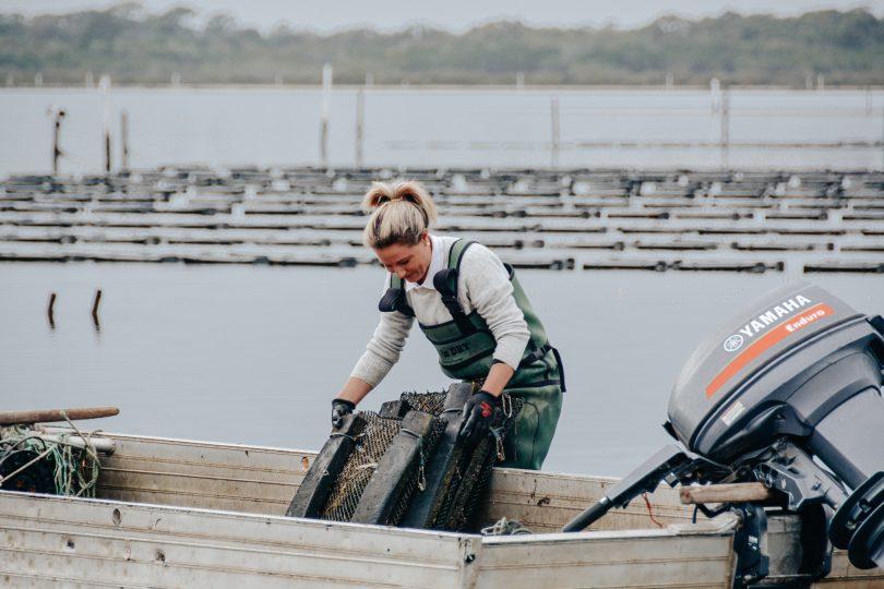 Pip Boyton working on an oyster lease at Merimbula