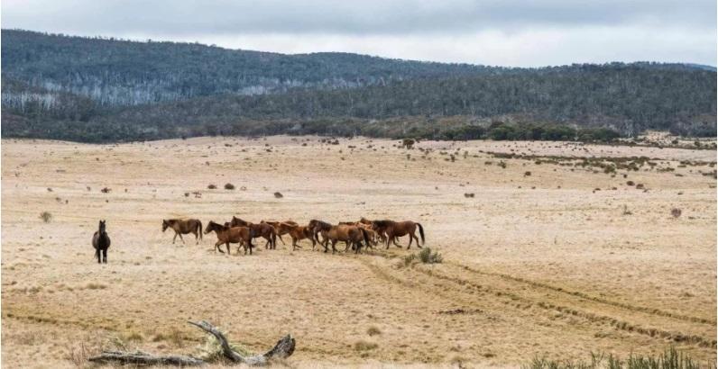 Wild horses on open plain
