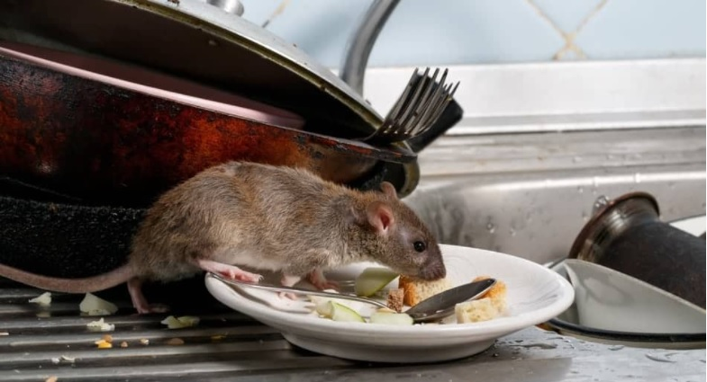Plague of mice and rats