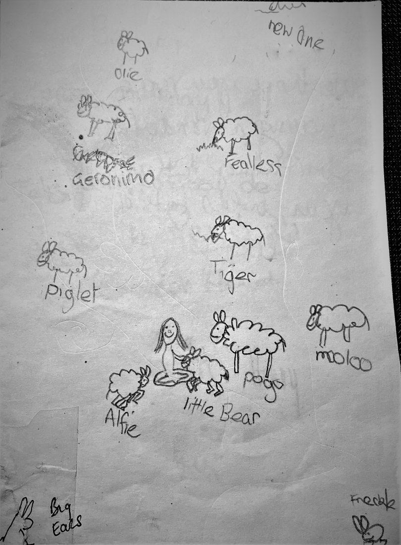 Lamb drawings