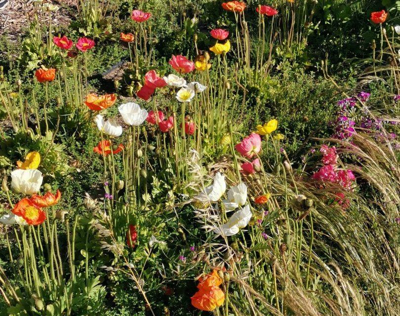 Flowers at Cloudland Flower Farm