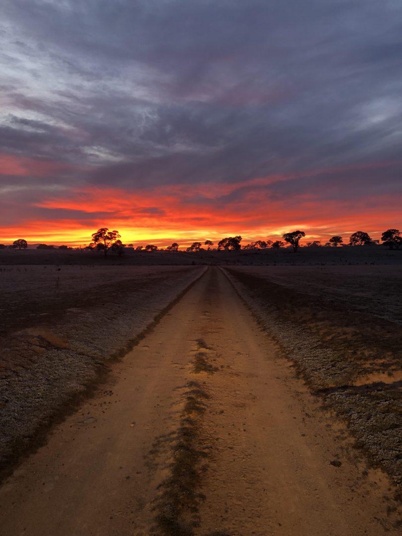 Bush sunset